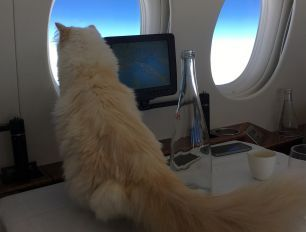 Fly With Choupette: The interview