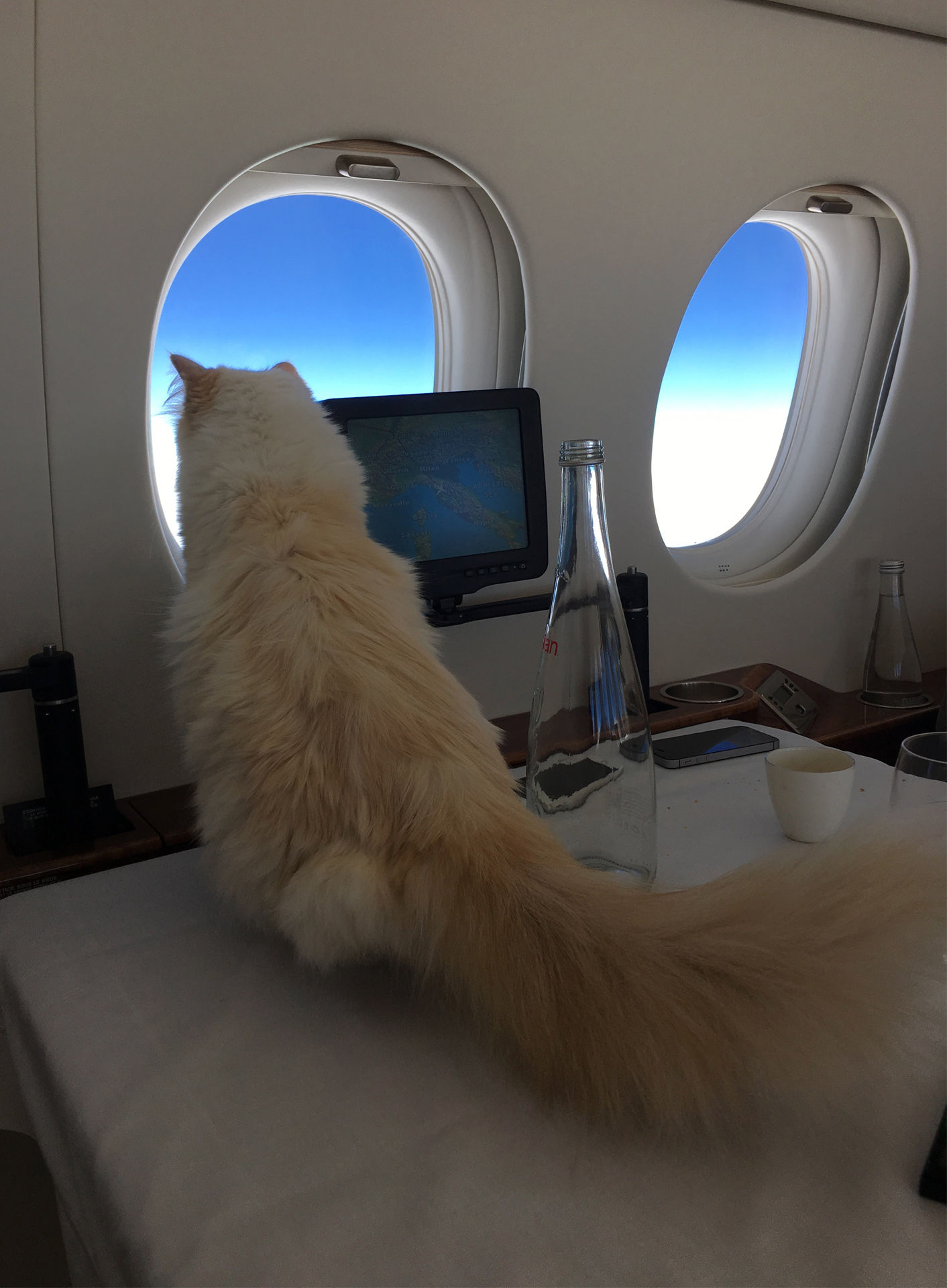 Fly With Choupette The Interview World Of Karl